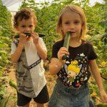 אי ירוק בעיר – סיור חקלאות וקטיף עצמי למשפחות