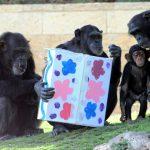 """חגיגת חנוכה בגן החיות התנ""""כי ובאקוורים ישראל, בירושלים"""