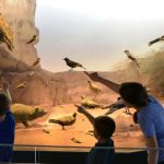 """""""חקרטבע"""" באווירה פורימית, במוזיאון הטבע ע""""ש שטיינהרדט"""