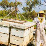 דבש, דבורים, דבוראים ומועצת הדבש
