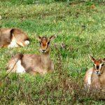 המשפחה מוזמנת לבקר בפארק הטבע העירוני עמק הצבאים שבירושלים