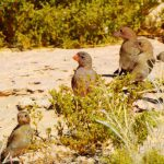 דרכו המופלאה של הטבע הפראי: ציפורי שיר מבריחות נחש שפיפון