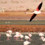 הערבה הדרומית מזמינה את כל המשפחה לסיורים בטבע