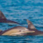 שמורת ים אבטח: מרכיכות וצדפות ועד דגיגים ודולפינים