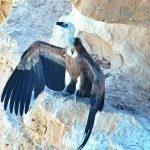פורשים כנף: שומרים על העופות הדורסים של ישראל