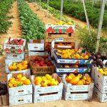 חקלאים ליום אחד: פעילות לכל המשפחה בחווה החקלאית 'בין השיטין'