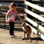 גן גורו: בעלי חיים אוסטרליים חדשים, בגן שכולו הפתעות מהנות