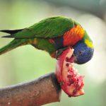פותחים שנה חדשה בגן גורו: בעלי חיים אוסטרליים ופעילות משפחתית