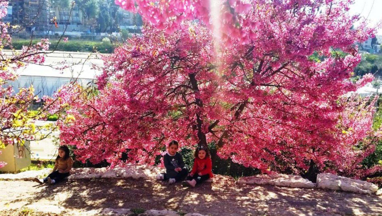 פריחות מרהיבות בגן הבוטני גבעת רם בירושלים