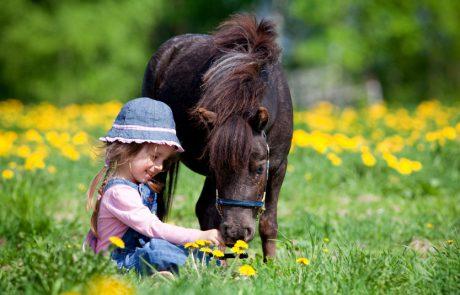 אוהבים לרכב על סוסים? שלוש חוות מומלצות מצפון ועד דרום