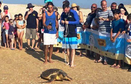 'טנגה' צבת הים ניצלה, טופלה, הבריאה וחוזרת הביתה