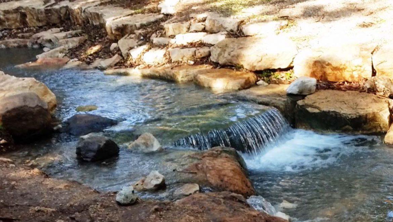 פארק המעיינות: מים זורמים, ציפורים נודדות ומשפחות מכייפות
