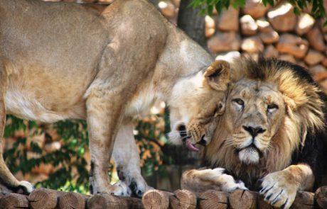 """בגן החיות התנ""""כי שותפים של הטבע"""