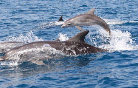 תיעוד מלהיב: להקת דולפיננים משתעשעת